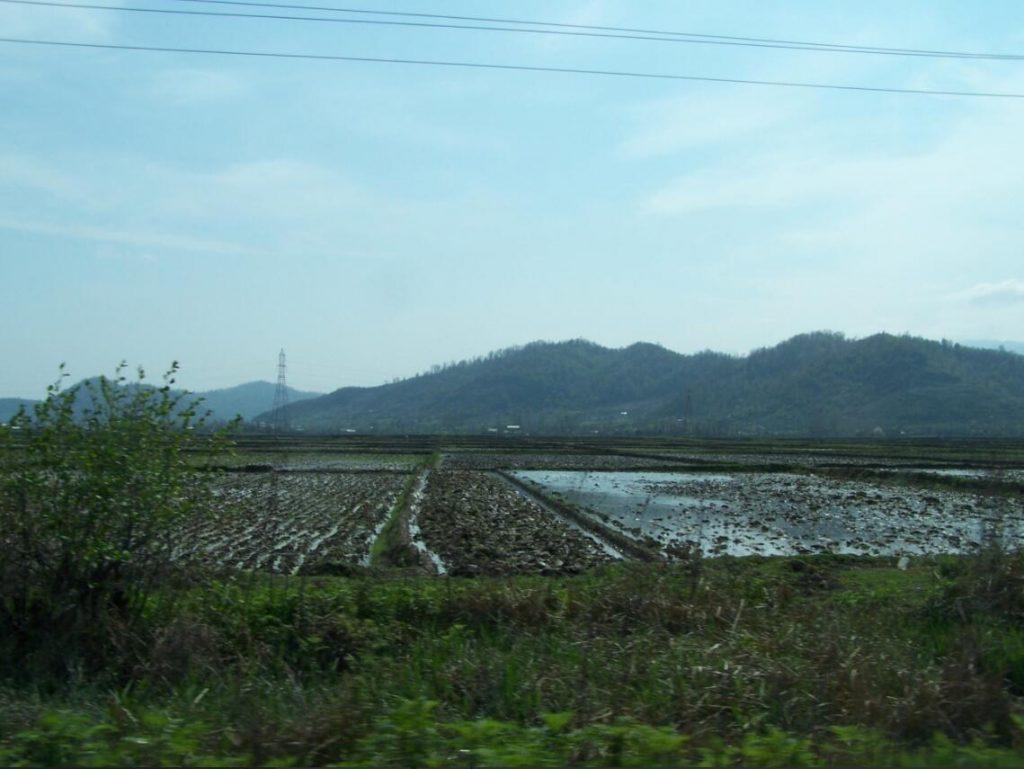 Iran Rice fields on the coasts of the Caspian Sea