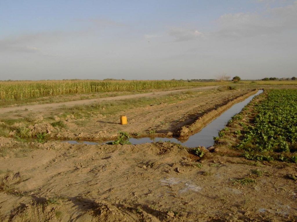 Irrigated agriculture in Khuzestan Iran