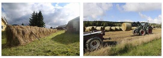 Norway Agriculture, Forestry, Livestock and Fishing